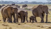 African leaders to hold elephant summit
